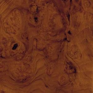 Wurzelnussbaum